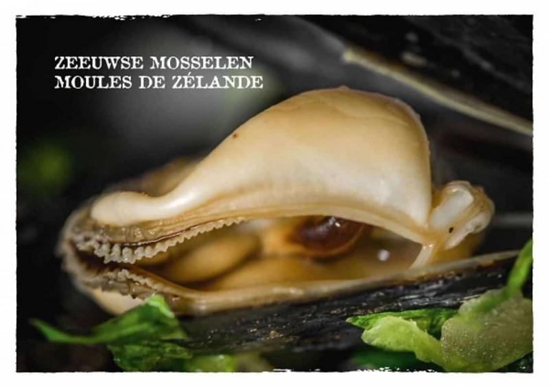resto-real-koksijde-mosselen-zeeuwse